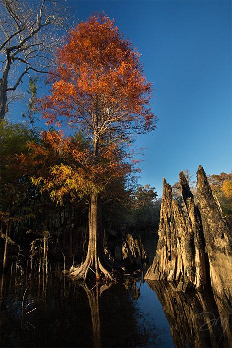 Holmes Cypress Color