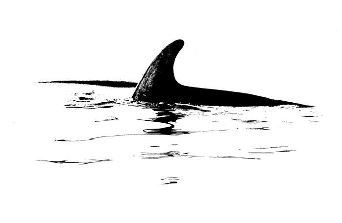 Oil Blot Dolphin