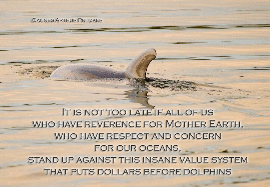 Unspoiled  Dolphin