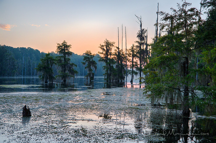 Mill Pond Sunrise