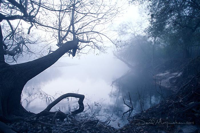 Silhouette_in_Mist