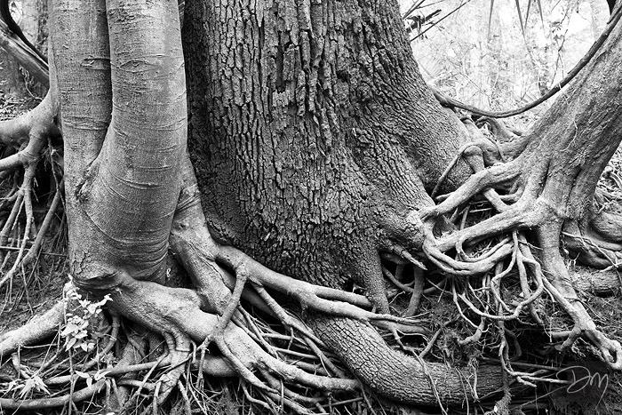 Roots_8180-lg