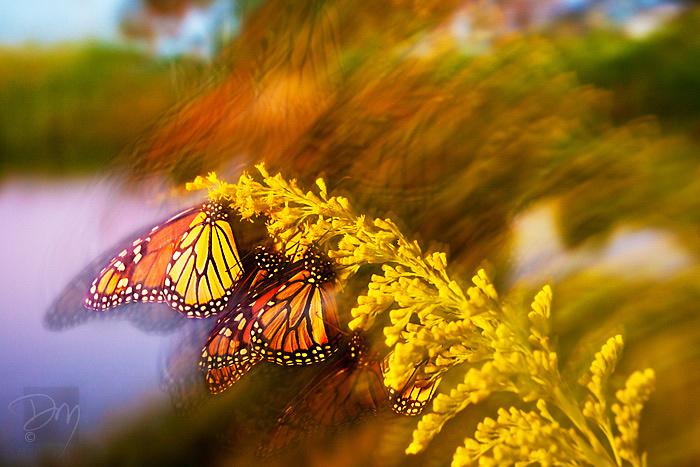 Butterfly_Blur