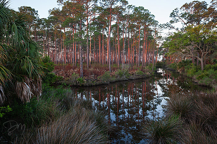 St_Marks_Flatwoods