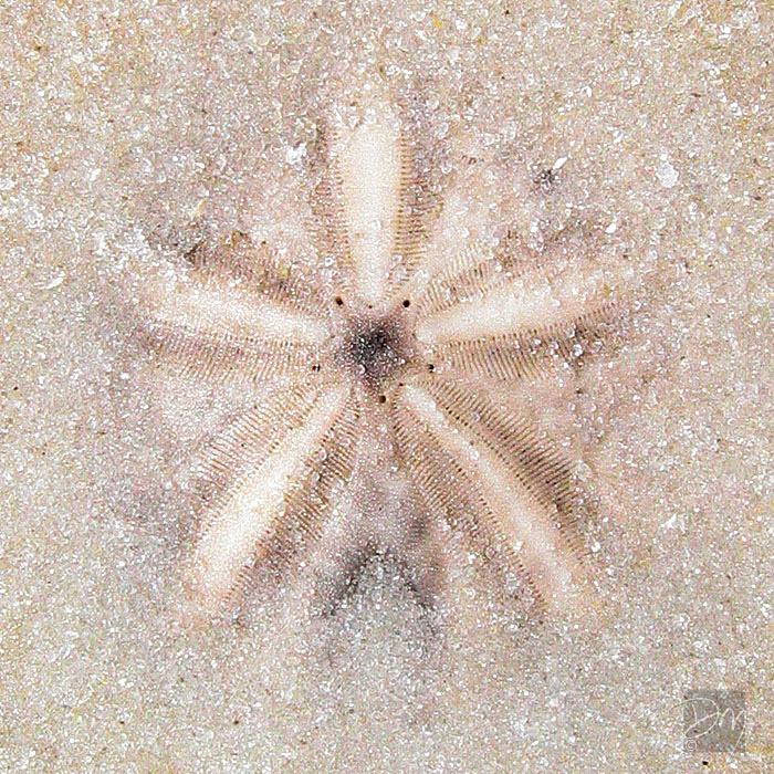 Sand man Dala