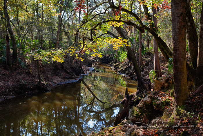 Aucilla River Sink Autumn V