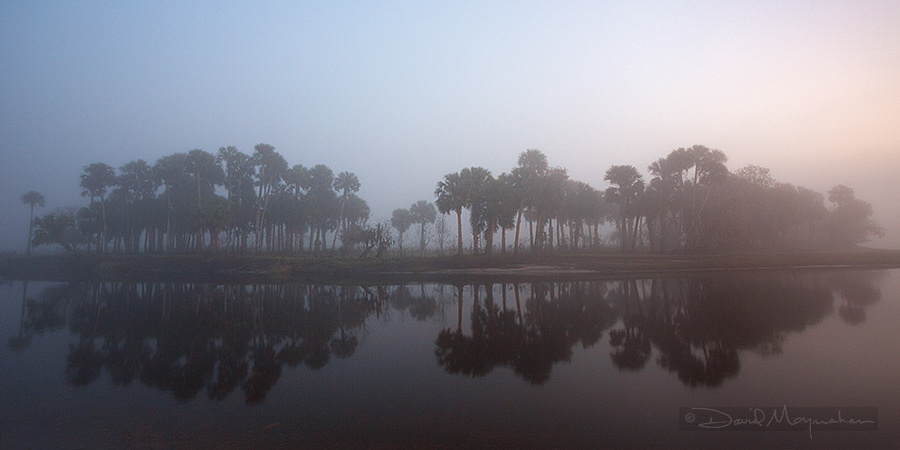 Misty_Palm_Pano