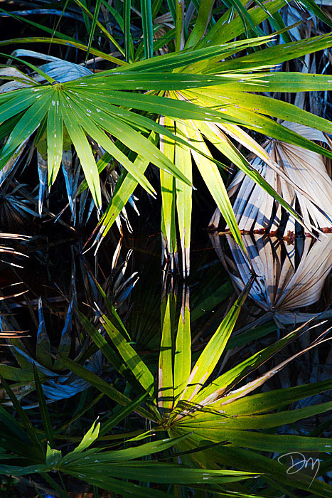 Palmetto Light Reflected