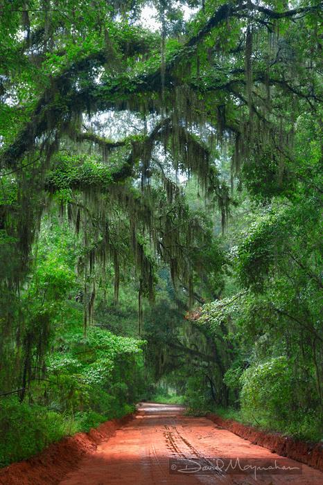 Canopy Road V