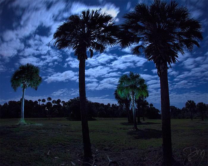 Night_Palm_Peace