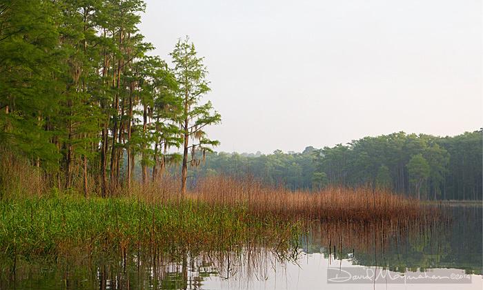 Lake Hiawatha Grasses