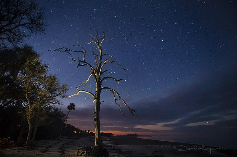 Big Pine Stars