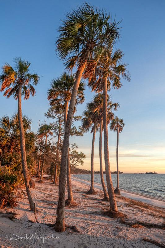 Palm Bay 2