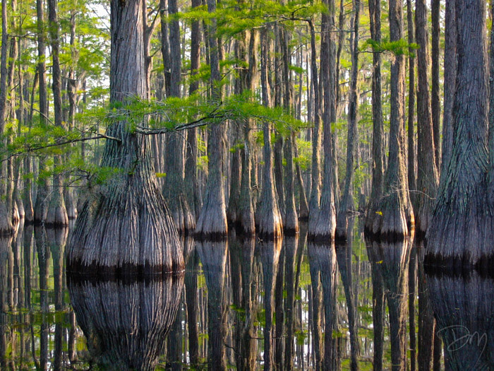 Cascade Cypress Swamp