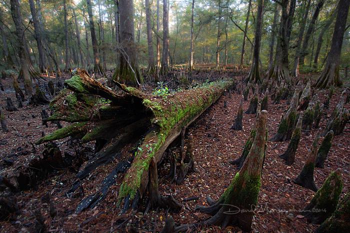 Deadfall Swamp