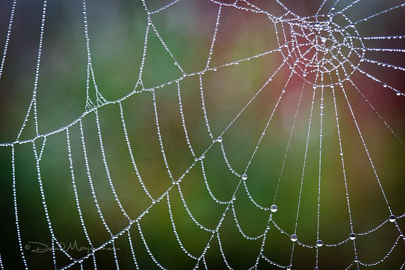 Pearled Web 2