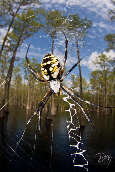 Swamp Web