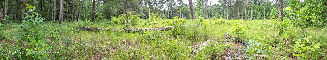 Upland Meadow Pano - Rattlesnake