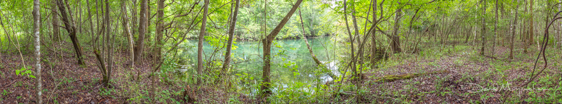 WetlandPano -Cottonmouth