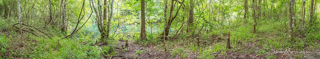 Wetland Pano - Water Snake