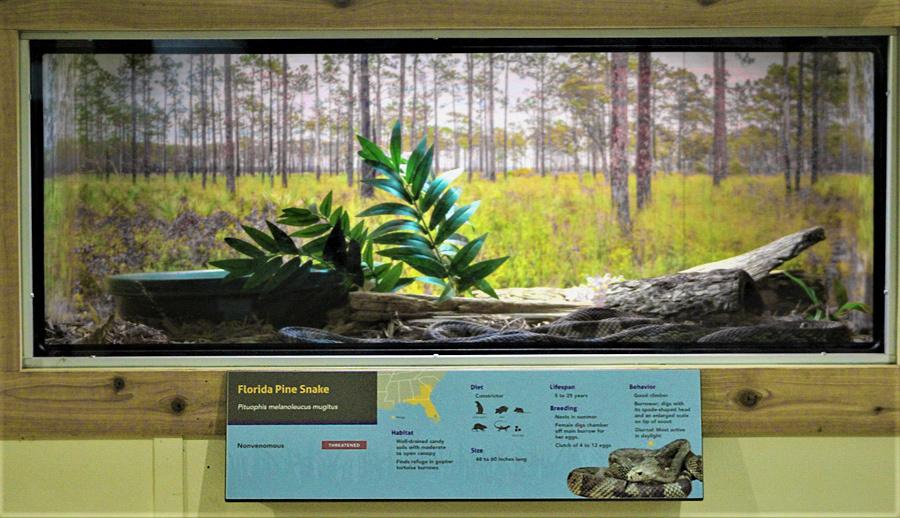 Florida Pine Cage_v3