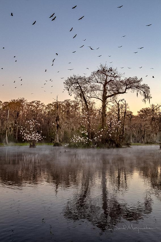 Bird Paradise - Wakulla Springs