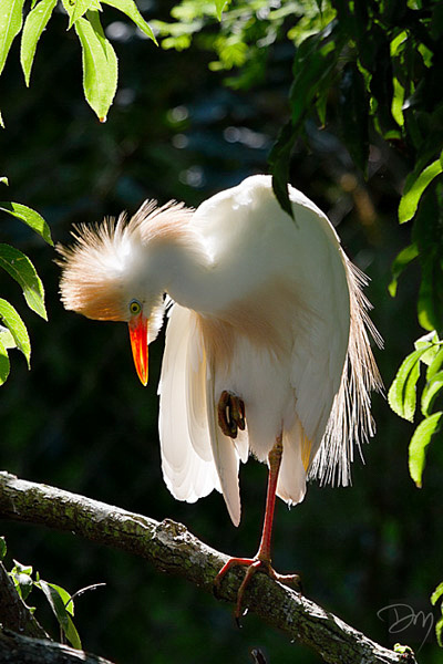 Egret Intimacy