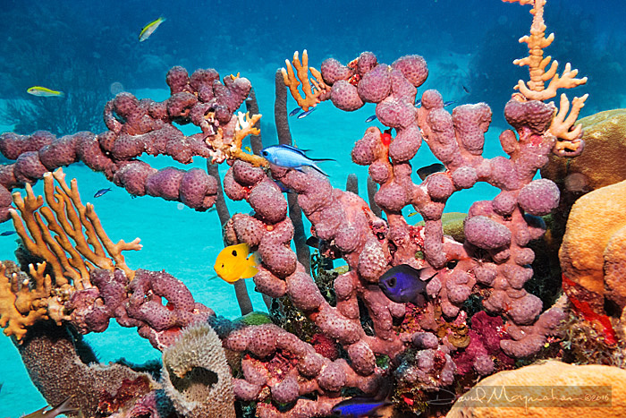 Reef-scape 1