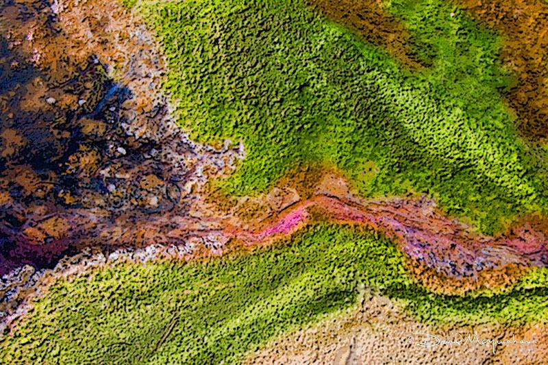 Microbial Art