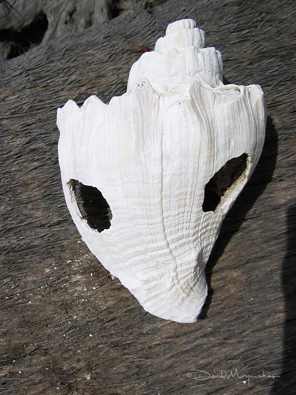 Shell Tool