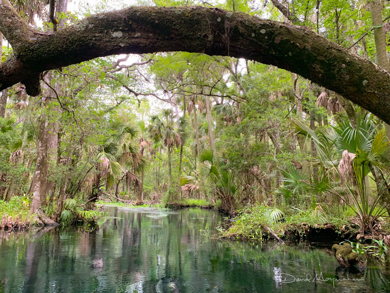 Swamp Gate