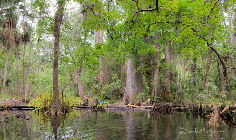 Dense Swamp