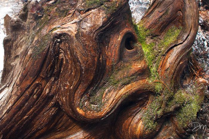 Cypress Gargoyle