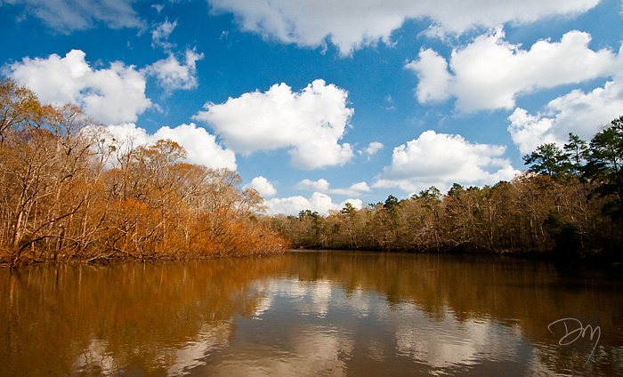 Choctawhatchee River Vista 2