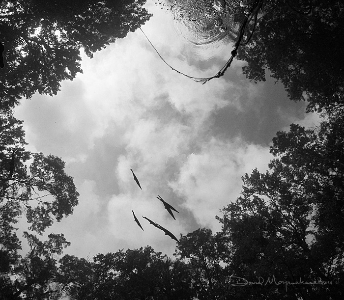 Flying_Fish_2_B&W