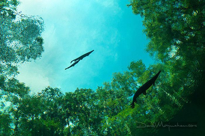 Flying_Fish_3