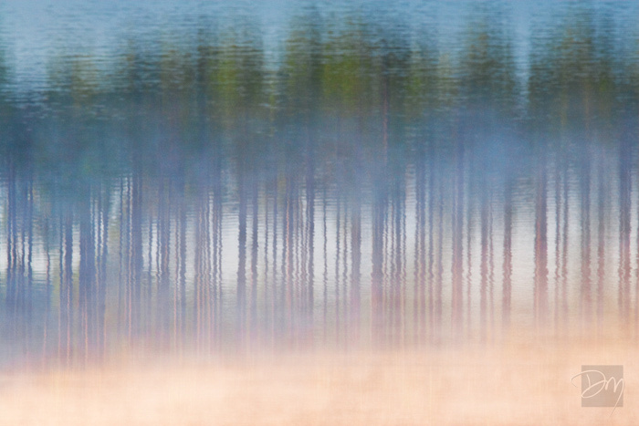 Pines in Mist Inversion