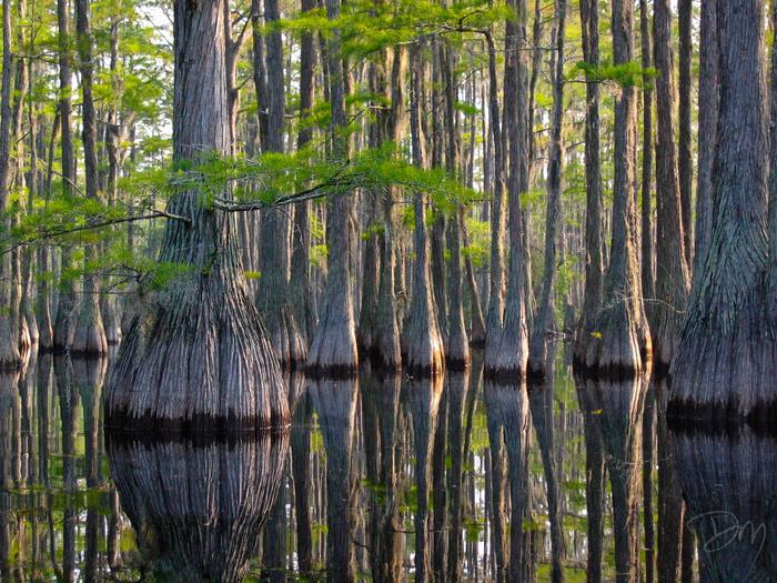Cascade_Cypress_Swamp