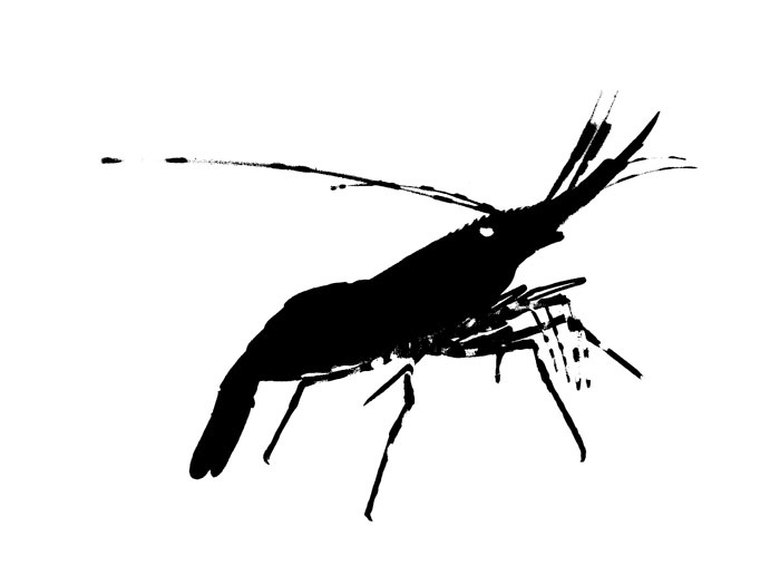 Oil Blot Shrimp