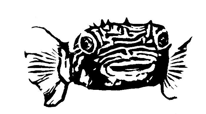 Oil Blot Burrfish