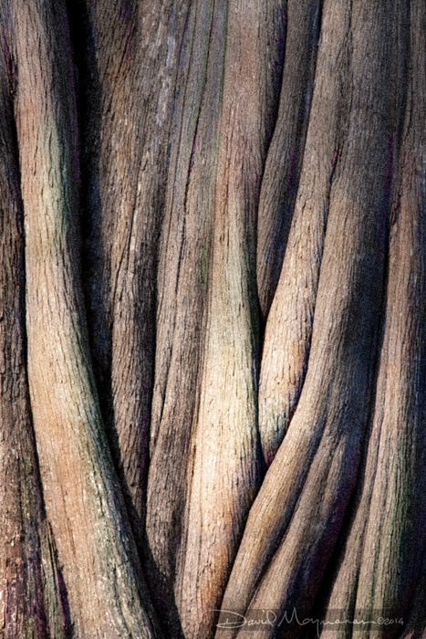 Painted_Folds_of_Cypress