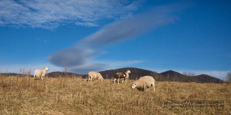 Farm-5535