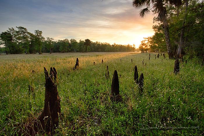 Sunrise_Meadow_Knees