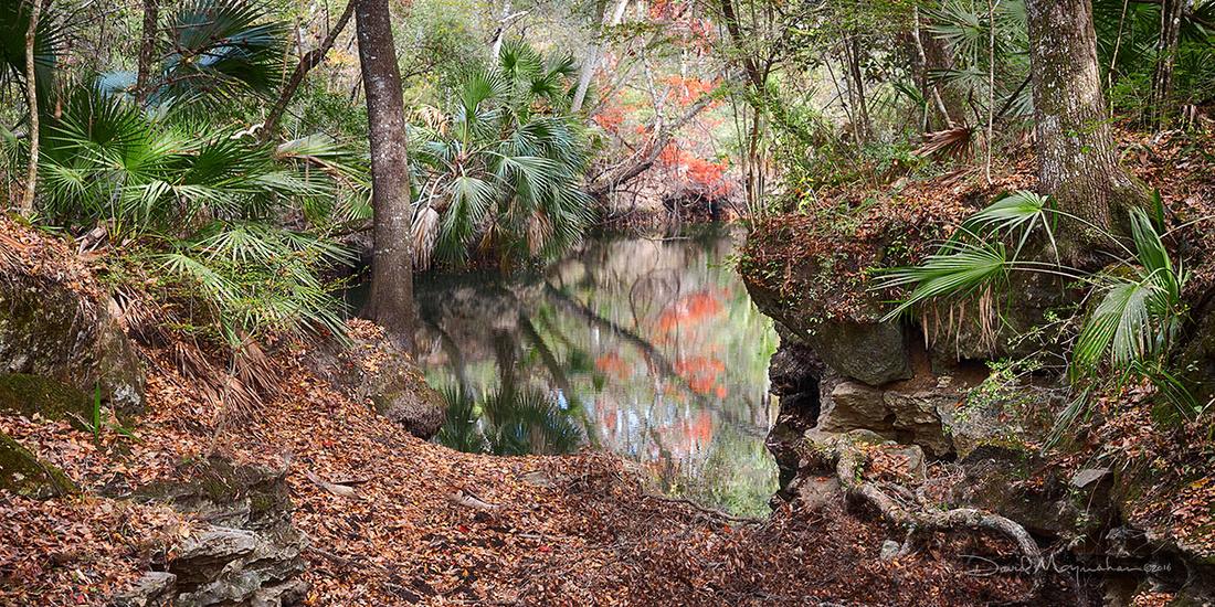 Aucilla River Sink Autumn III