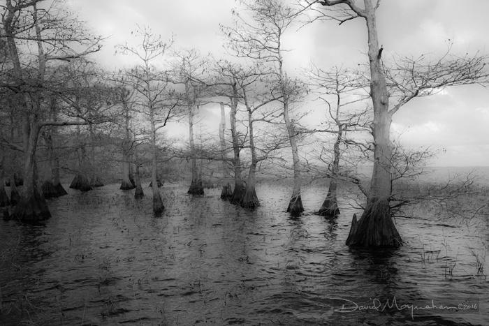 Tenor_of_Cypress