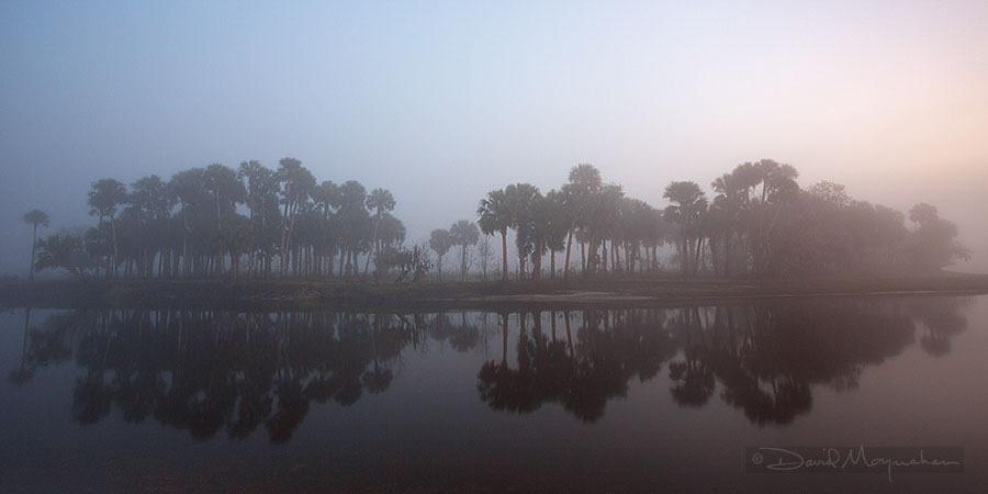 Misty_Palm_Pano