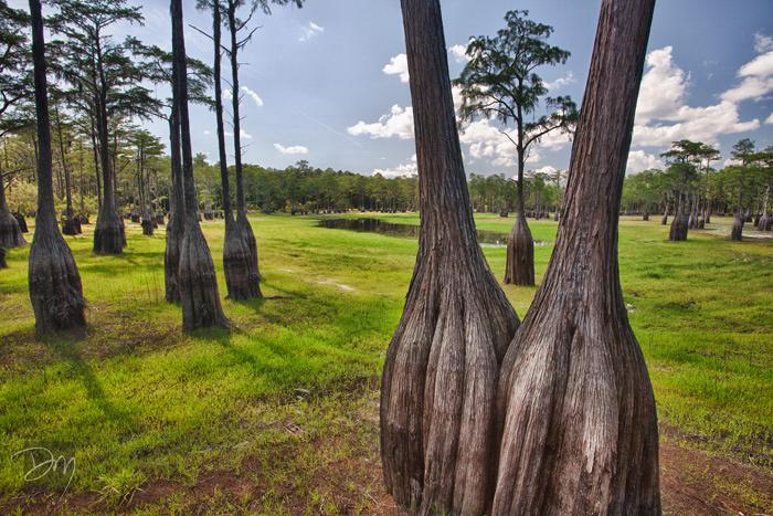 Double Tree Dry
