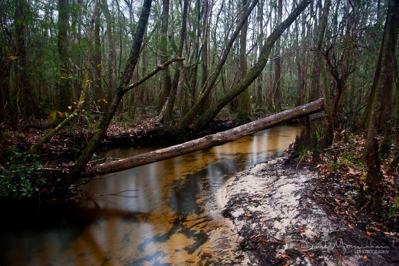 Seven Runs Creek-1.jpg