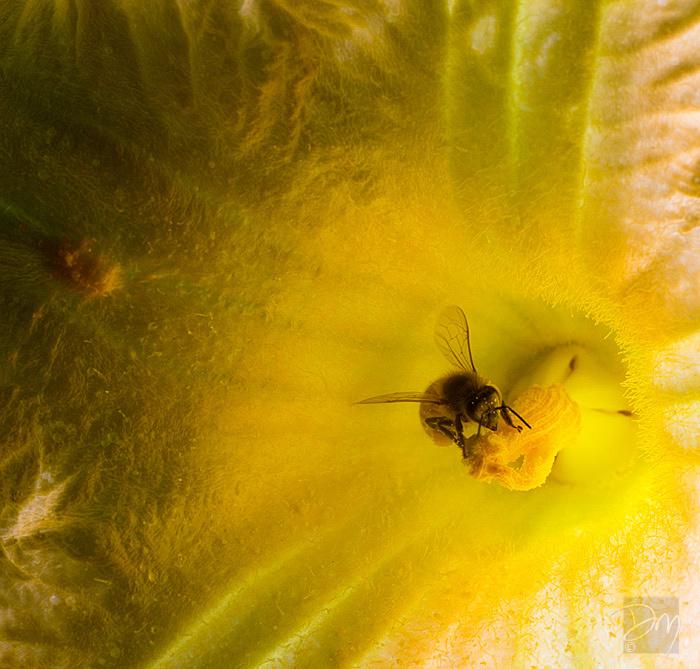 Blissful Pollinator