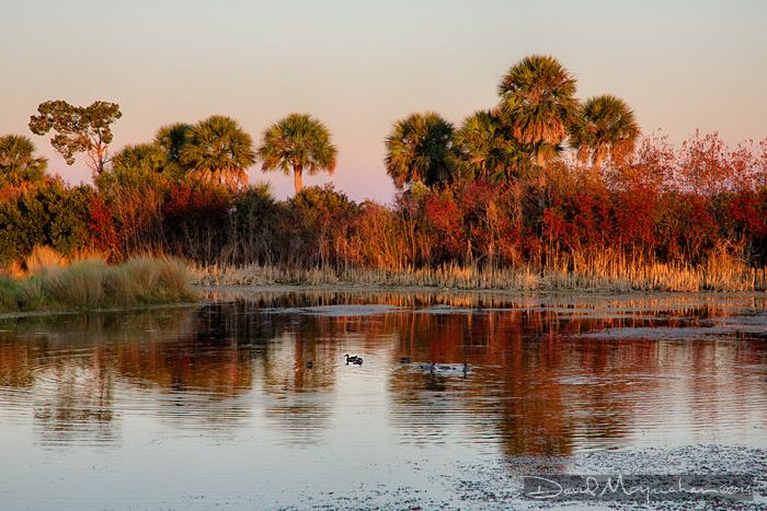 St. Marks Palm Sunset